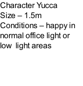Character Yucca Size – 1.5m  Conditions – happy in normal office light or low  light areas